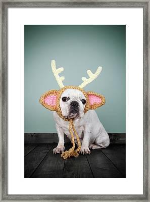 Bulldog Con Disfraz De Reno Framed Print by Retales Botijero