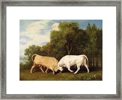 Bulls Fighting Framed Print by George Stubbs