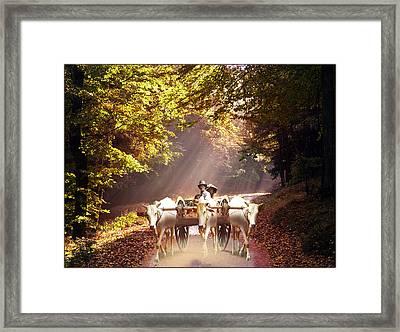 Bulls Ride Framed Print by E  Kraizberg