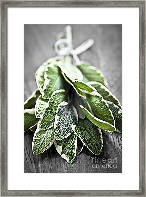 Bunch Of Fresh Sage Framed Print by Elena Elisseeva