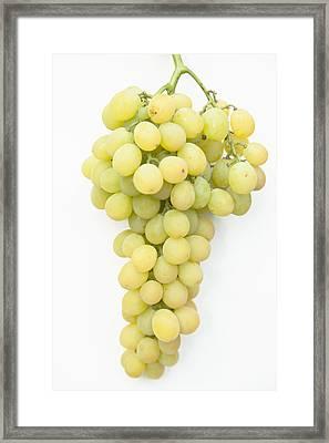 Bunch Of Grapes Framed Print by Maj Seda