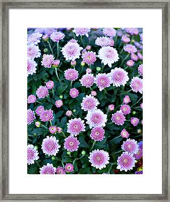 Bunch Of Pink Framed Print by Malania Hammer