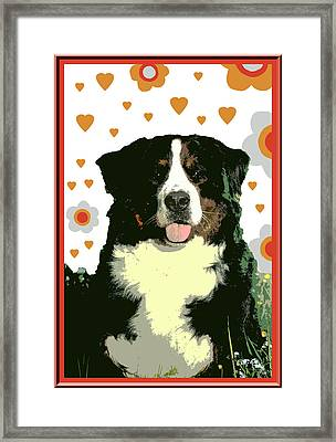 Burmese Mountain Dog Framed Print by One Rude Dawg Orcutt