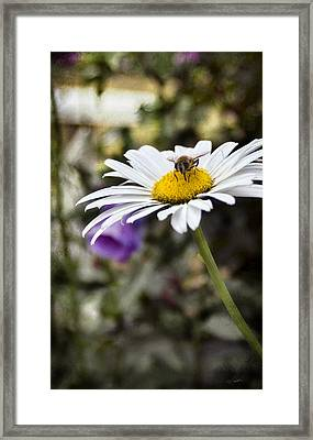 Busy Bee 2 Framed Print by Peter Chilelli