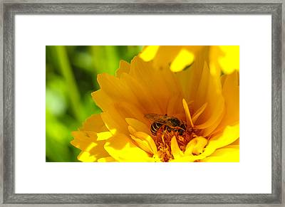 Busy Bee  Framed Print by Scott McGuire