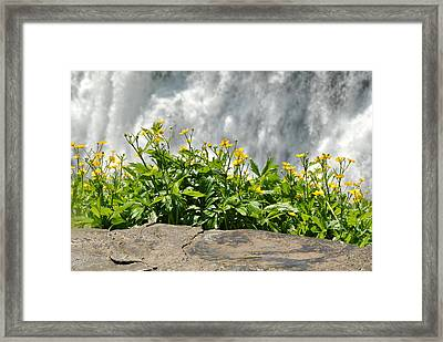 Buttercup With Waterfalls Framed Print by Wayne Sheeler