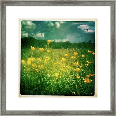 Buttercups Framed Print by Neil Carey Photography