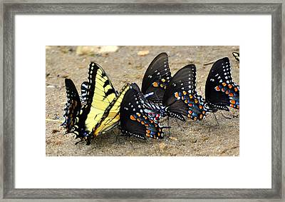 Butterflies By The Buches Framed Print by Marty Koch