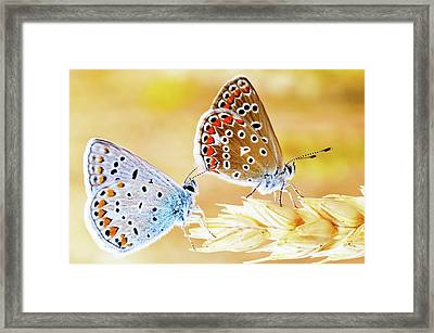 Butterflies Framed Print by Photo by cuellar