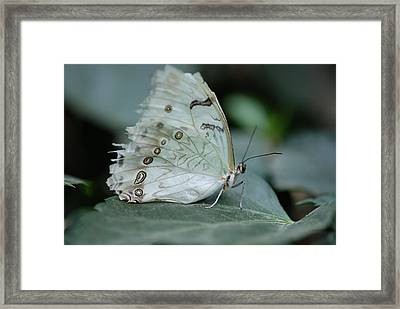 Butterfly 04. Framed Print by Francois Cartier