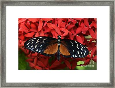 Butterfly 1 Framed Print by Bob Christopher