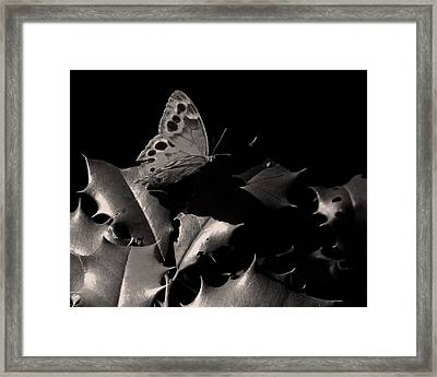 Butterfly Framed Print by Brian M Lumley