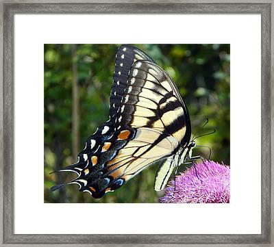 Butterfly Harvest II Framed Print by Sheri McLeroy