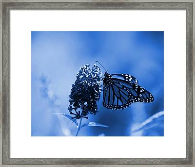 Butterfly In Blue Framed Print by Angie Tirado