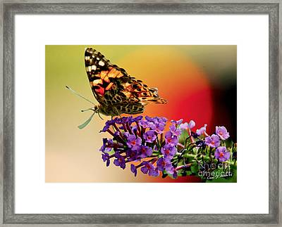 Butterfly In The Sunset Framed Print by Carol F Austin