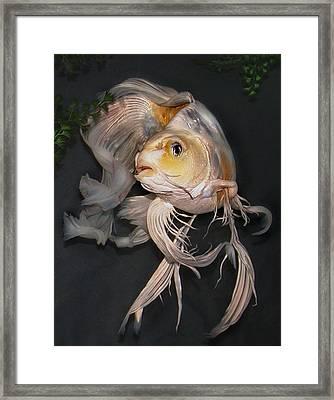 Butterfly Koi B Framed Print by Janna Morrison