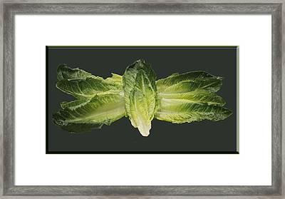 Butterfly Lettuce Framed Print by LeeAnn McLaneGoetz McLaneGoetzStudioLLCcom
