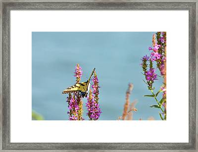Butterfly Morning Framed Print by Bill Cannon
