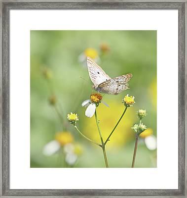 Butterfly On Wildflower Framed Print by Kim Hojnacki