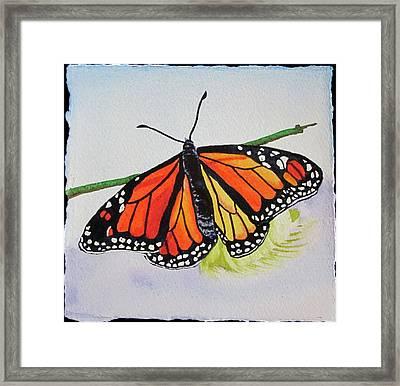 Butterfly Framed Print by Teresa Beyer