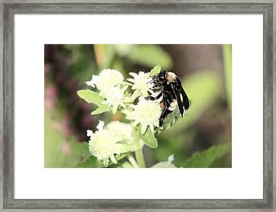 Buzz Framed Print by Laura Oakman