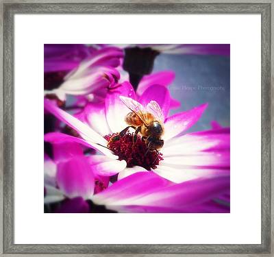 Buzz Wee Bees Ll Framed Print by Lessie Heape