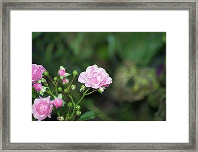 By Any Other Name Framed Print by Elaine Mikkelstrup
