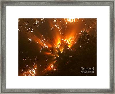 By The Dawns Early Light Framed Print by Marjorie Imbeau