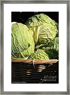 Cabbage Heads Framed Print by Susan Herber