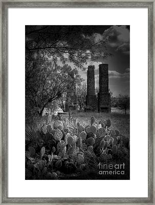 Cactus At Fort Phantom Hill Framed Print by Fred Lassmann