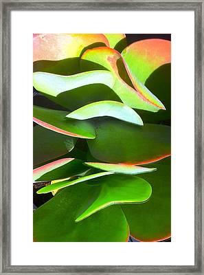 Cactus Wave Framed Print by Paul Washington