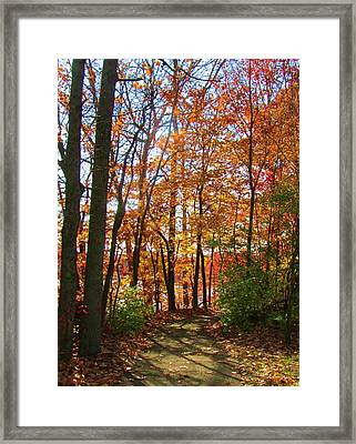 Caesar's Path Framed Print by Vijay Sharon Govender