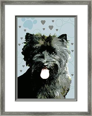 Cairn Terrier Framed Print by One Rude Dawg Orcutt