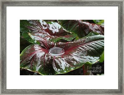 Caladium Puddle Framed Print by Theresa Willingham