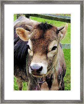 Calf Closeup Framed Print by Susan Savad