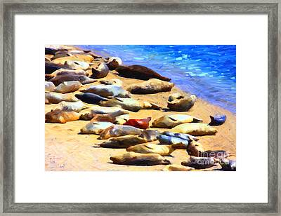 California Sunbathers . Harbor Seals Framed Print by Wingsdomain Art and Photography