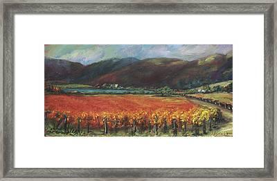 Calistoga Vineyard In Napa Valley By Deirdre Shibano Framed Print by Deirdre Shibano