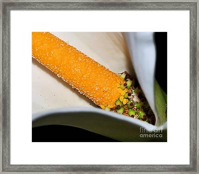 Calla Lily - Stamen Macro Framed Print by Kaye Menner