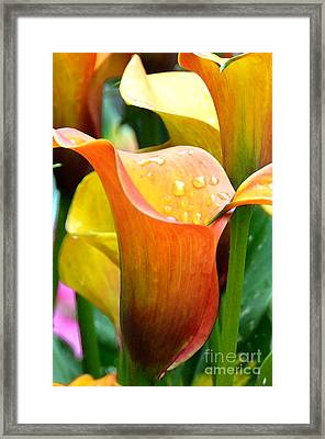 Calla Painting Framed Print by Pravine Chester
