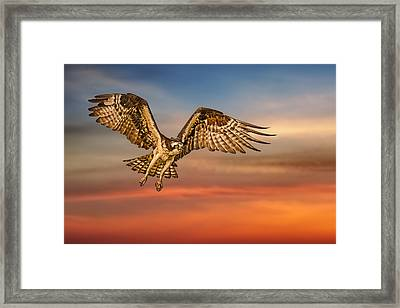 Calling It A Day Framed Print by Susan Candelario