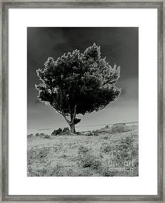 Calms Framed Print by Amy Sorrell