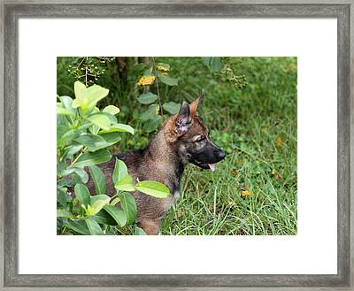 Camouflage Puppy Framed Print by Christean Ramage