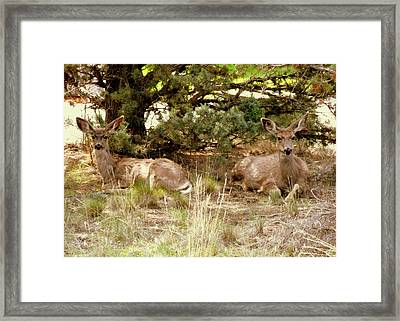 Camouflaged Framed Print by Cindy Wright