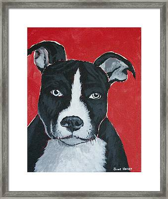 Can I Go Home With You Framed Print by Jaime Haney