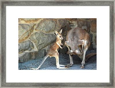 Can You Look To See  Framed Print by Kathy Gibbons