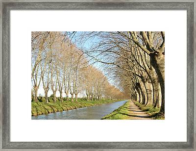 Canal With Tree Framed Print by Teocaramel