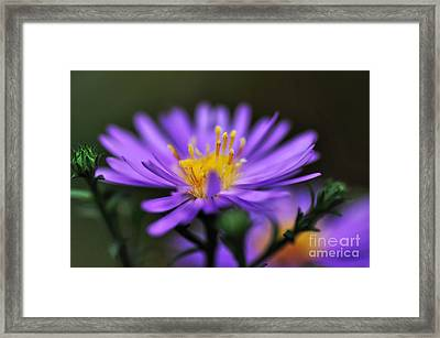 Candles On A Daisy Framed Print by Kaye Menner