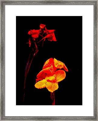 Canna Lilies On Black Framed Print by Mother Nature