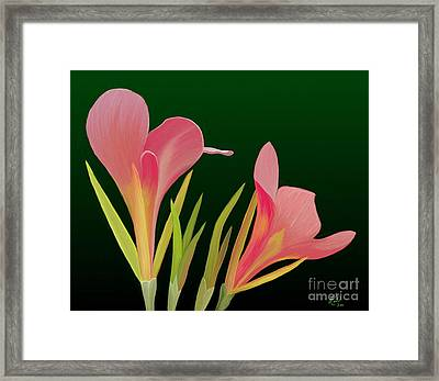 Canna Lilly Whimsy Framed Print by Rand Herron