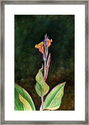 Canna Lily Framed Print by Irina Sztukowski